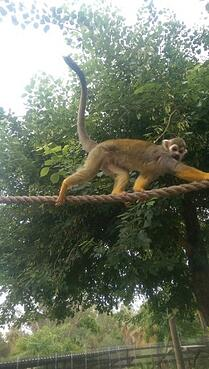 Monkey at Phoenix Zoo