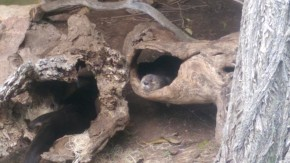 Otters at Phoenix Zoo
