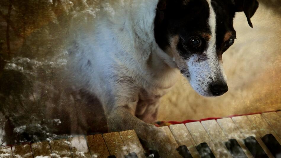 Lolabelle playing keyboard